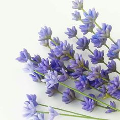Lavender - petalsweet cakes