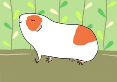 Proud Red and White Guinea-pig by Amble & Sing