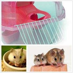 Pet Hamster House Multiunit Plastic House Cage With Exercise Wheel Mouse Toy For Rat Hamster House at Banggood sold out