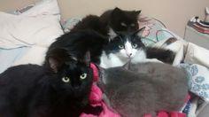 Ninho de gatinhos.