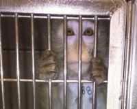 End Animal Experiments at... - The Petition Site