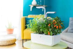 Versatile and perfect for any space! Growing Herbs, Growing Vegetables, Hydroponic Strawberries, Vegetables For Babies, Indoor Vegetable Gardening, Smart Garden, Gadgets, Aromatic Herbs, Herbs Indoors