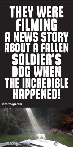 They were filming a news story about a fallen soldier's dog when the INCREDIBLE happen!