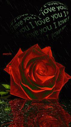 roses - ชุมชน - Google+