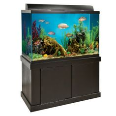 Diy aquarium stand 150 gallon woodworking projects plans for Petsmart fish tanks for sale