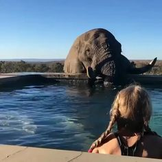 Abused Elephant Shackled and Forced to Take Part in Festival - Tiere - tierbabys Beautiful Creatures, Animals Beautiful, Animals And Pets, Baby Animals, Baby Elephants, Wild Animals, Elephant Love, Mundo Animal, Funny Animals