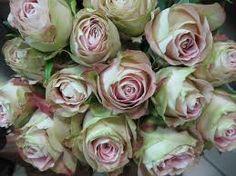 Image result for upper secret rose