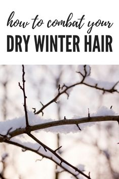 How to Combat Your Dry Winter Hair - Healthy with Luba What You Can Do, How To Get, Hair Care Tips, Hair Tips, True Health, Winter Hairstyles, Hair Health, Dry Hair, Wellness Tips