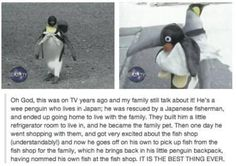 Pet penguin @Sandi Davidson