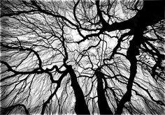 Oaktree Trees, Art, Art Background, Kunst, Gcse Art, Wood