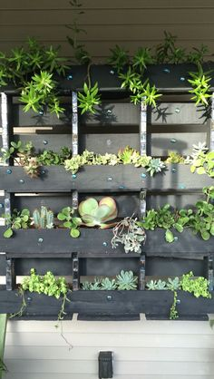 Recycled pallet with my beloved succulents