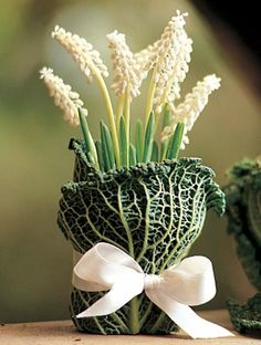 Dress up forced bulb containers for special occasions. Here, savoy cabbage leaves and ribbon take potted muscari to white-tie status.