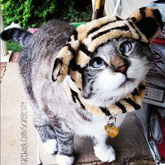 Spangles, el gato bizco que se ha hecho famoso por sus disfraces | La Loca de los Gatos