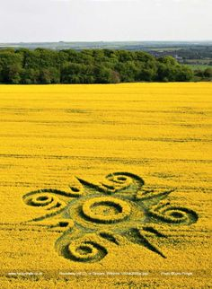Lucy Pringle's Crop Circle Photograph Library : Roundway Hill (2) nr - devizes, Wiltshire, May 2009