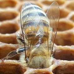 I Love Bees, Bees And Wasps, A Bug's Life, Bee Art, Annual Plants, Save The Bees, Bee Happy, Bees Knees, Bee Keeping
