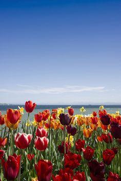 Blumeninsel Mainau im Frühling! http://www.travelbook.de/deutschland/Bodensee-Die-9-besten-Tipps-fuer-Urlaub-am-Schwaebischen-Meer-141723.html