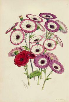 The Antiquarium - Antique Print & Map Gallery - James Andrews - Cinerarius - Pl 6 - Hand-colored lithograph