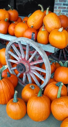 Orange round and oblong pumpkins displayed on a vintage farm wagon. Fall has arrived! Harvest Farm, Apple Harvest, Fall Harvest, Pumpkin Patch Pictures, Fall Pumpkin Pictures, Fall Pumpkins, Halloween Pumpkins, Fall Pictures, Outdoor Pictures