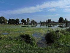 Plan d'eau de Plobsheim   Flickr - Photo Sharing!