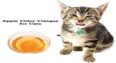 Apple Cider Vinegar Cat