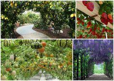 Hur du odlar hängande trädgårdar