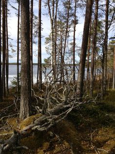 Salamajärvi National Park in Finland. Baltic Sea, Conservation, Lakes, Iceland, Wilderness, Home And Family, National Parks, Europe, Landscape