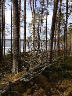 Salamajärvi National Park in Finland. Salamajärven kansallispuisto