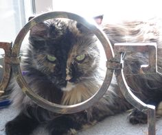 I've been framed! cat tortoise shell