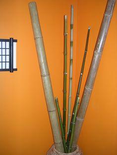 Interior Bamboo Poles