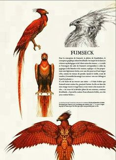 Fumseck (French for Fawkes)