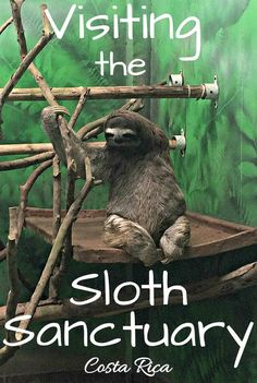 Arriving in Costa Rica, there was one thing on my must-do list – visit the world's only sloth sanctuary, located right outside the town of Cahuita on the Caribbean Coast.