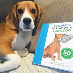 Ludo Taylor and some light reading Beagle