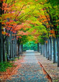 Princeton Allee in Fall Autumn