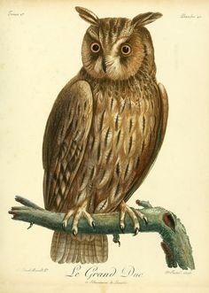 https://flic.kr/p/e6MWMh | n258_w1150 | Histoire naturelle des oiseaux d'Afrique /. A Paris :Chez J.J. Fuchs, libraire ...,7, 1799-1808. biodiversitylibrary.org/page/41412354