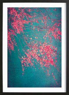 Whispers Of Pink - Ingrid Beddoes - Poster im Holzrahmen
