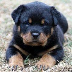 puppy!! puppy!! puppy!!