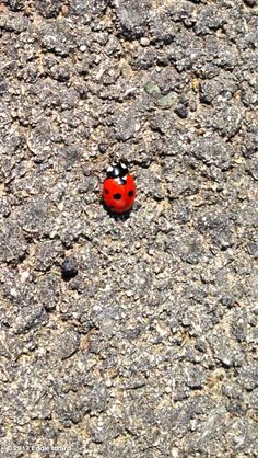 Eddie Izzards, photo,The ladybirds are out. It must be a late spring