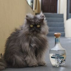 Top 5 most famous cats