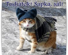 Animals And Pets, Kittens, Crochet Hats, Animation, Humor, Memes, Winter, Funny, Pets