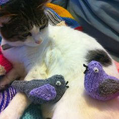 Two turtle doves - courtesy of the 12 knits of Xmas. Disgruntled cat - courtesy of owner ;-)
