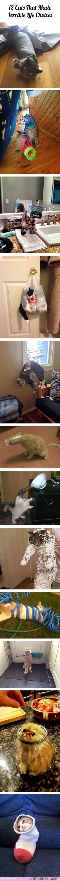 12 cats that made terrible life choices