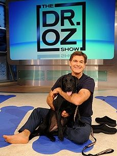 Dr. Oz's Labrador Rosie - his nickname for her is Flabrador, lol. February is Pet Dental month on Dr. Oz's show.