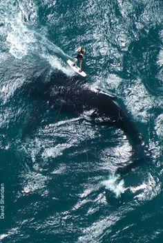 kitesurf ballenas