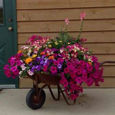 Flower filled rusty wheelbarrow.