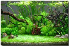 ♥ Aquarium Ideas ♥  freshwater planted tank                                                                                                                                                                                 More