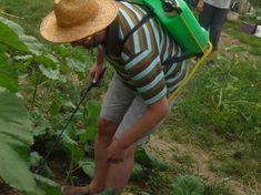 Garden Pests, Pest Control, Organic Gardening, Organic Farming, Bed Bugs Treatment