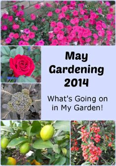 May Gardening - What jobs should we be doing - thelinkssite.com