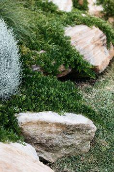 Myoporum parvifolium - A native ground cover plant garden landscaping Australian Garden Design, Australian Native Garden, Landscaping With Rocks, Front Yard Landscaping, Landscaping Ideas, Mulch Landscaping, Back Gardens, Outdoor Gardens, Mediterranean Garden Design