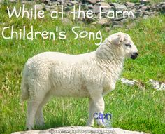 Capri + 3: While at the Farm-Children's Song #playfulpreschool