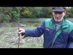 Sadzenie drzewek owocowych - YouTube Dom, Gardening, Youtube, Lawn And Garden, Youtubers, Youtube Movies, Horticulture